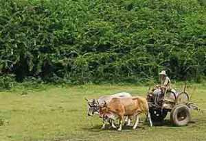 A 50 años de la Segunda ley de Reforma Agraria